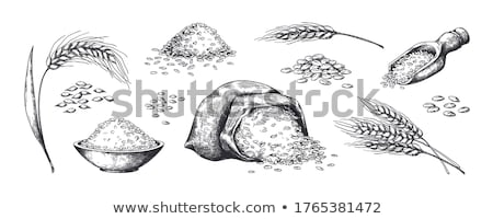Designed Agriculture Grain Rye Ear Spike Vector Stock photo © pikepicture