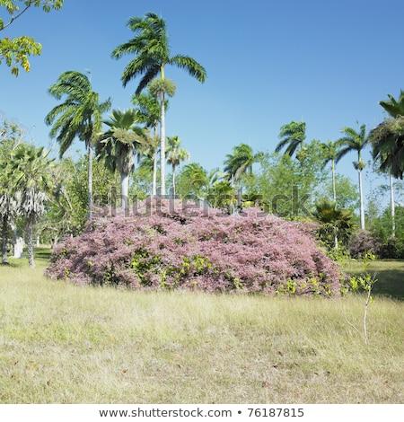 Plantkunde tuin weg natuur bomen planten Stockfoto © phbcz