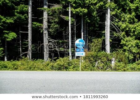 дорожный знак зеленый облаке улице знак Billboard Сток-фото © kbuntu
