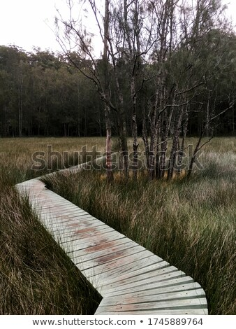 footbridge with moving path Stock photo © Paha_L
