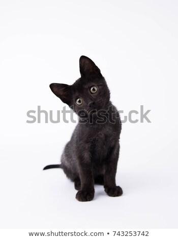 Noir chaton chat blanche studio Photo stock © FOKA