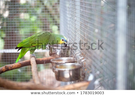 Papagáj madár zöld állatok szín díszállat Stock fotó © pavel_bayshev
