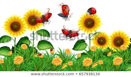 Ladybug · подсолнечника · цветок · красоту · лет · красный - Сток-фото © illustrart