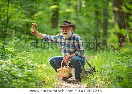 キノコ · 森林 · 浅い · フィールド · バスケット · ツリー - ストックフォト © photography33