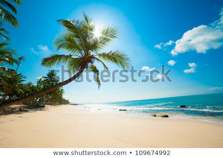 Idyllic beach with palm. Sri Lanka Stock photo © dmitry_rukhlenko