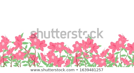 Illustration of azalea stock photo © perysty