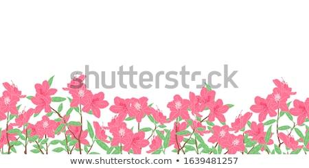 Illustration of azalea Stock photo © perysty