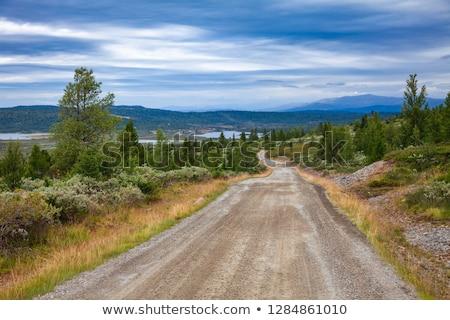 yol · Norveç · çim · yol · dağ - stok fotoğraf © rwittich