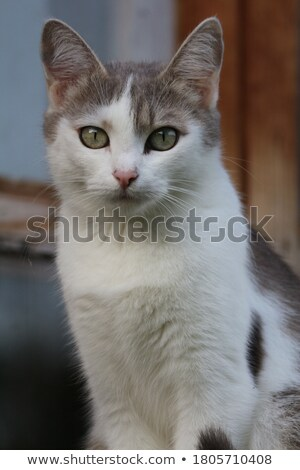 dourado · cara · perfurante · 3d · render · olhos · homem - foto stock © AlienCat