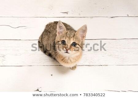 Kat naar vergadering oog achtergrond groene Stockfoto © kawing921