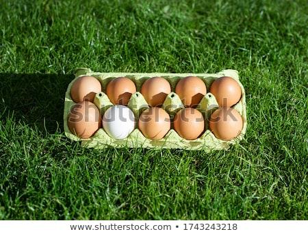 group of eggs in carton box closeup market outdoor Stock photo © juniart
