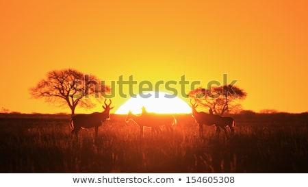赤 · 野生動物 · アフリカ · 自由 · 背景 · オレンジ - ストックフォト © Livingwild