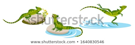 green basilisk lizard stock photo © vwalakte