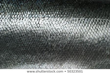 fish scales grunge texture back ground stock photo © inxti