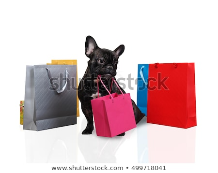 Black dog with shopping bags Stock photo © gemenacom