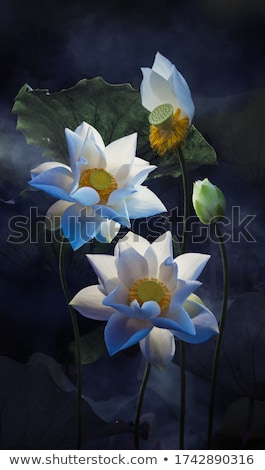 paars · water · voorjaar - stockfoto © allihays