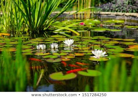 grama · verde · jardinagem · lagoa · santuário · quioto · paisagem - foto stock © nneirda