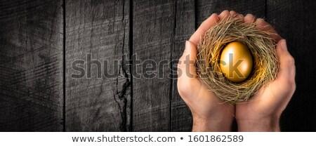 пенсия · инвестиции · гнезда · яйцо - Сток-фото © ottawaweb