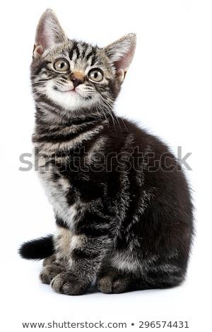 hoofd · klein · kat · geïsoleerd · witte · baby - stockfoto © vlad_star