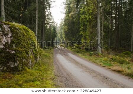 Mossy rock at a winding dirt road Stock photo © olandsfokus