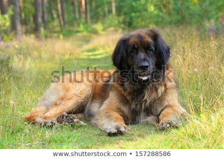 Portret groen gras gazon hond tuin triest Stockfoto © CaptureLight