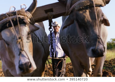 Man Farmer With Plough And Ox Seeding The Ground Stock photo © diego_cervo