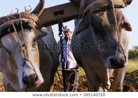 фермер · стороны · изолированный · белый · области · рабочих - Сток-фото © diego_cervo