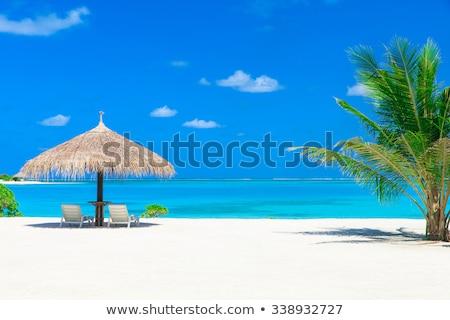 maldives island beach with palm tree and villa Stock photo © dolgachov