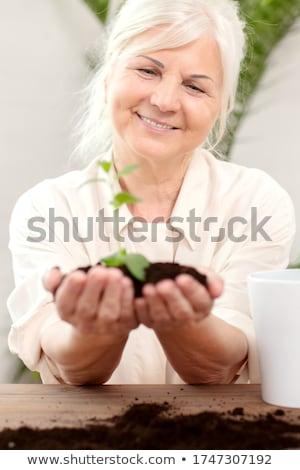 femme · semis · augmenté · sol · mains - photo stock © zurijeta