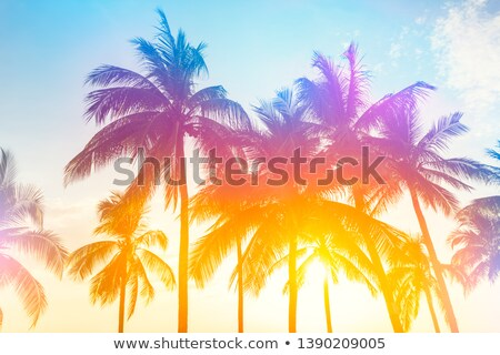 tropical · palms · sol · oceano · isolado · branco - foto stock © conceptcafe
