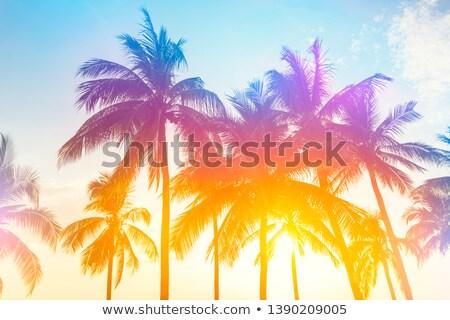 тропические закат Purple вектора градиент Сток-фото © ConceptCafe