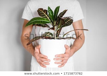 homem · planta · moço · de · mãos · dadas · pequeno - foto stock © rastudio