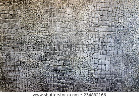 Részlet fal tapasz krokodil bőr textúra Stock fotó © zurijeta