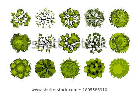 topview of the different plants stock photo © bluering
