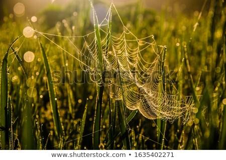 fű · vízcseppek · tavasz · tájkép · kert · háttér - stock fotó © alexeys