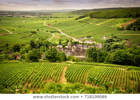 wine route burgundy france stock photo © phbcz
