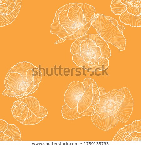 orange poppie stock photo © homydesign