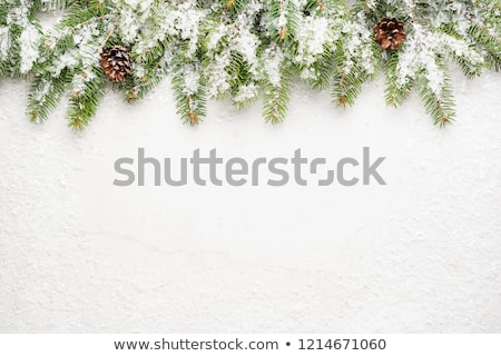 Spruce snow gray wooden background Stock photo © romvo