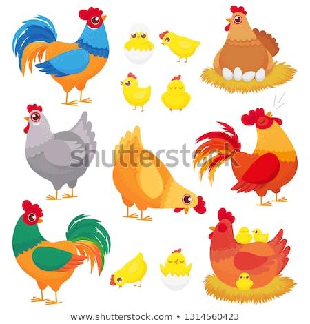 Rajz baba csirke fészek illusztráció tyúk Stock fotó © cthoman