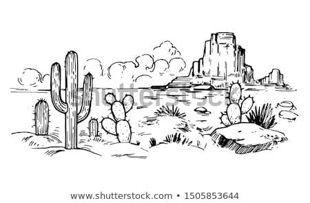 Woestijn scène cactus illustratie hemel zon Stockfoto © bluering