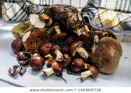 Halved porcini mushroom on the wooden background Stock photo © Alex9500