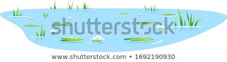 сцена воды Лилия пруд иллюстрация лес Сток-фото © colematt