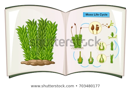 Book showing life cycle of moss Stock photo © colematt