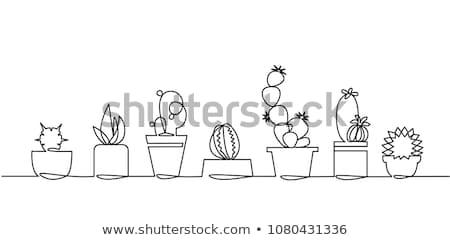 Houseplants vector set of hand drawing Stock photo © netkov1
