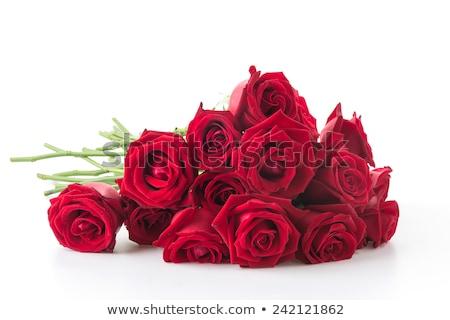 Steeg bos twee rozen bloem natuurlijk licht Stockfoto © Novic