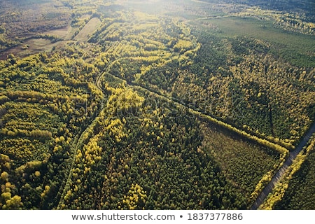 top view on a sunny summer day on a dirt road through the foliage of the forest natural background stock photo © artjazz