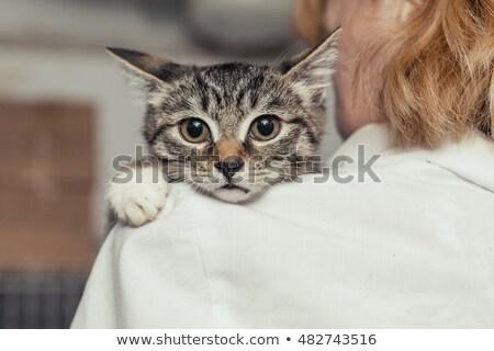 Erschrocken Rettung Kätzchen Frau Hände Ingwer Stock foto © ilona75
