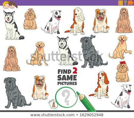 Encontrar dois cão jogo crianças Foto stock © izakowski