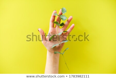 crop anonymous female holding fresh green plant over yellow background Stock photo © dashapetrenko