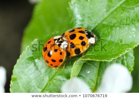 bicho · folha · planta · haste · inseto · espera - foto stock © tito